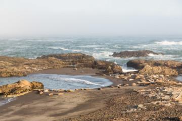 13.-15.7. MacKerricher SP - Harbor Seals