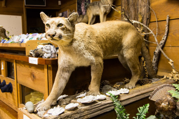 17.7. Grizzly Creek SP - Mountain Lion
