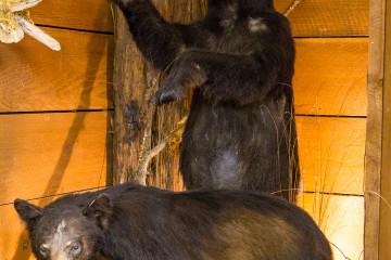 17.7. Grizzly Creek SP - Black Bear