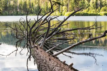 18.-20.7. Lassen NP - Manzanita Lake