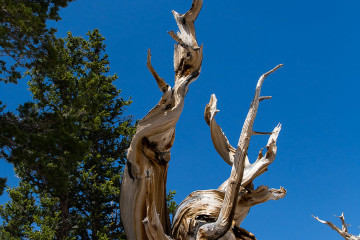 23.-25.7. Great Basin NP - Bristlecone Pines