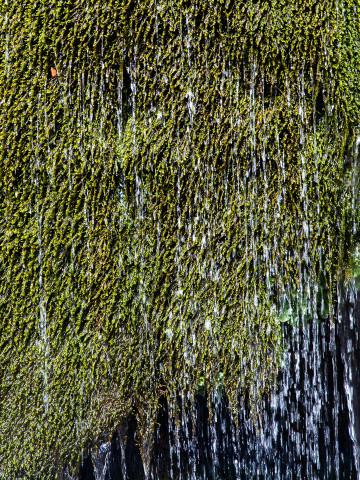 30.7. Ribbon Falls