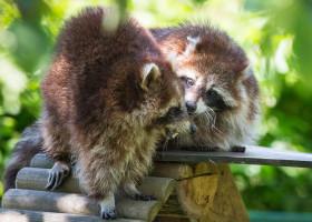 13.5.2013: Aachener Tierpark