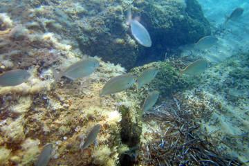 Fische vor Kreta