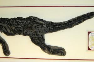 Scelidosaurier