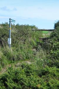 9.8. Lizard Point