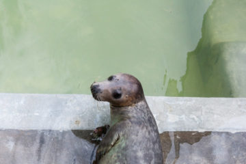 8.8.: Seal Sanctuary in Gweek