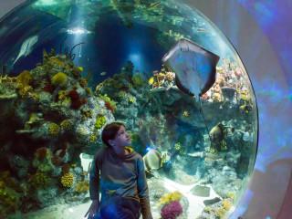 8.4.: Bristol Aquarium