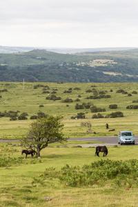 10.8. Dartmoor