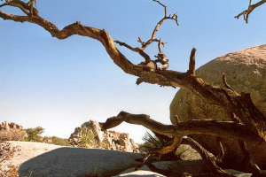 Joshua Tree NP: Wanderung im Hidden Valley.
