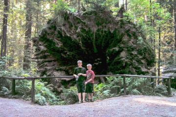 Sequoia im Humboldt Redwoods State Park