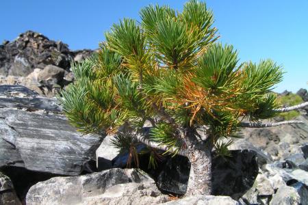 """Dieser """"Baum"""" ist 20 cm hoch"""