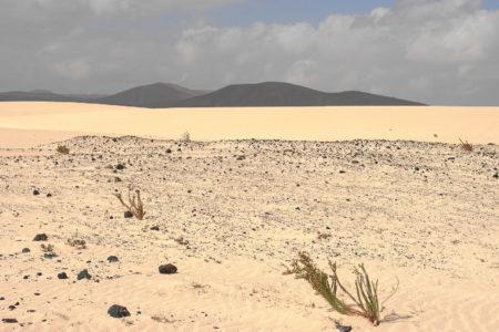 Wüste - wir sind ja auch auf der Höhe der Sahara. Die Dünen El Jable.