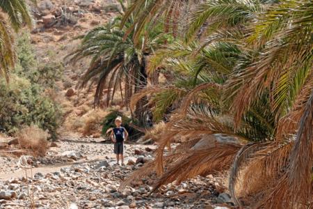 Barranco de las Peñitas - üppige Vegetation im Bachbett