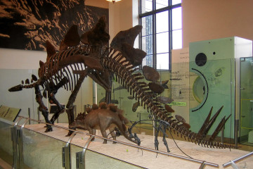New York: American Museum of Natural History.