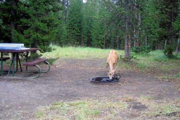 Bridge Bay Campground, Yellowstone