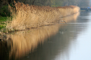 Am Coevorden-Picardie-Kanal