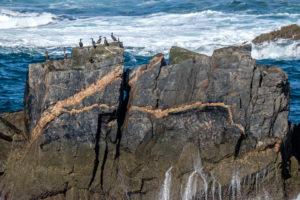 13.9.2016 - Mangersta Beach - Kormorane