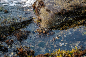 7.8.2017 - Salt Creak Recreation Area, Tide Pooling, Sea Barnicles