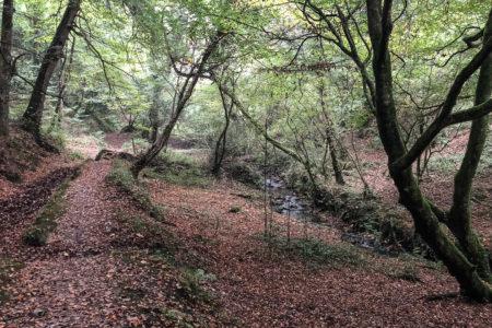 15.10.2017 - Helford, Wanderung Frenchman Creek