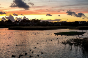 4.11.2017 - RSPB, Lake Radipole