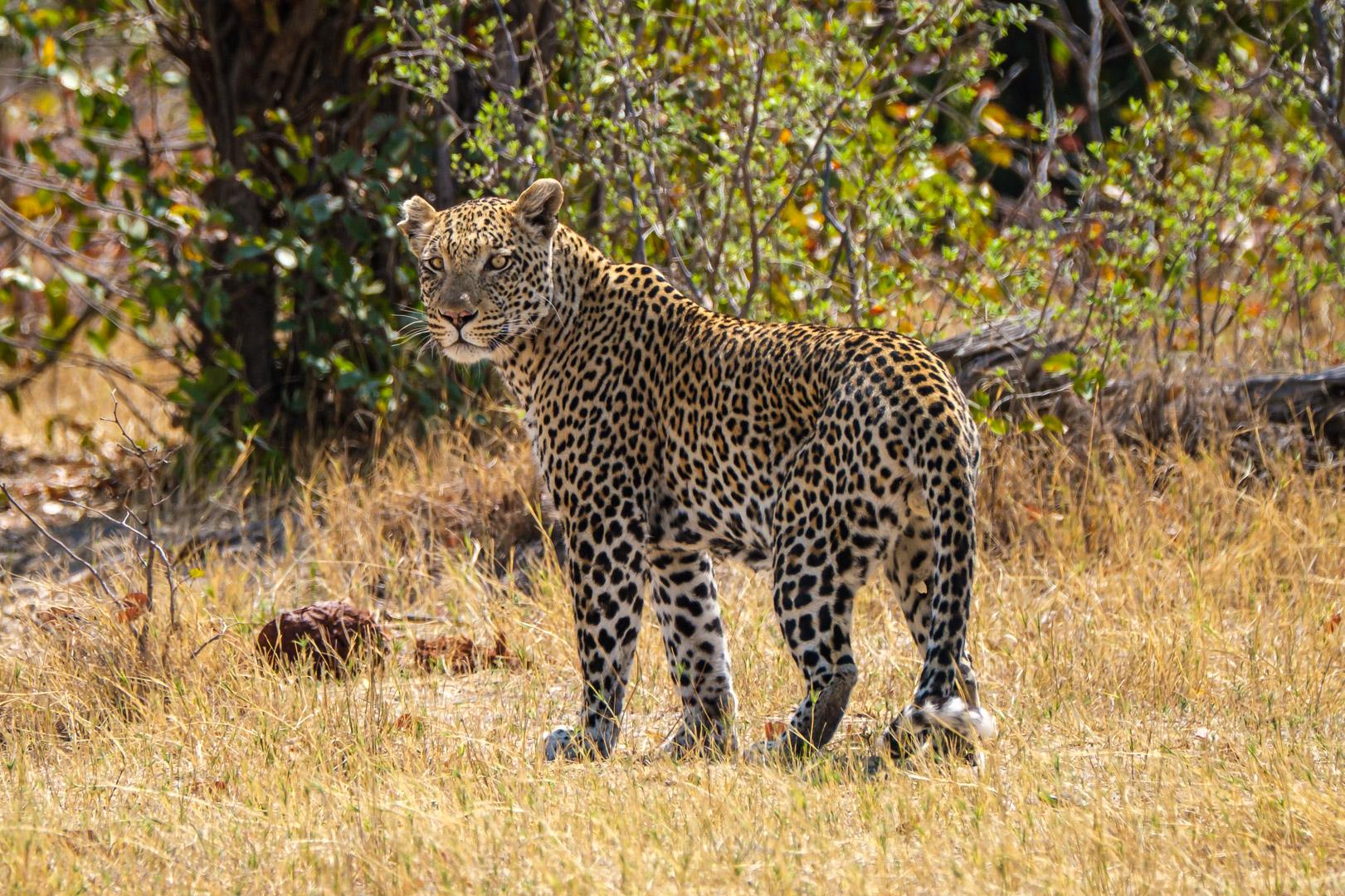 Afrika 2019 – Tierwelt … und noch mehr