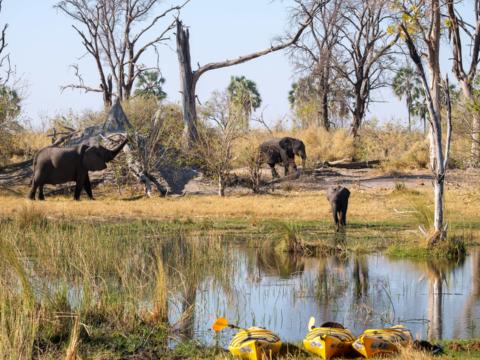 2.9.2019 - Kayak Tag 3, Elefantenbesuch beim Camp 3