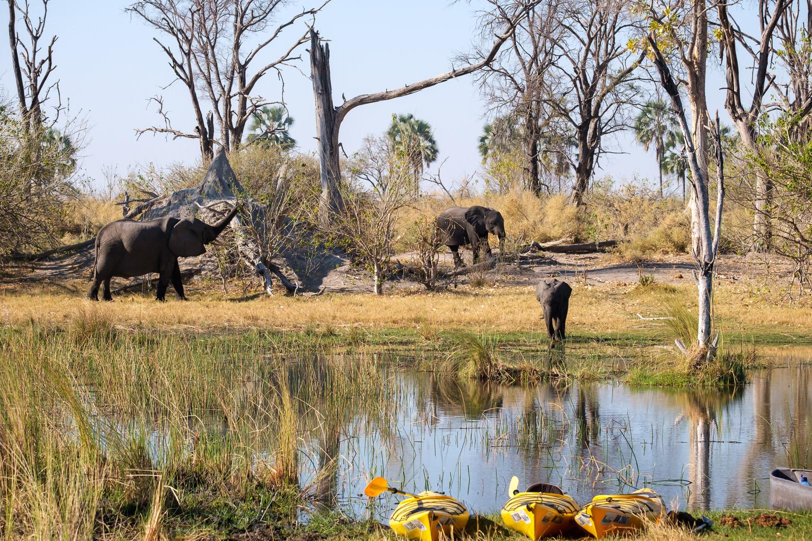 Afrika 2019 – Tierwelt, Elefanten