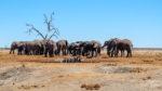 Afrika 2019: Chobe National Park