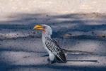 Afrika 2019: Birding