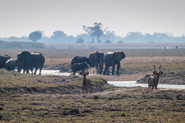 17.9.2019 - Buffalo Core Area - Elefanten, Kudus