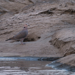 Afrika 2019 – Birding, in Wald und Busch