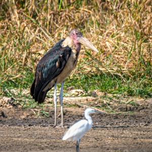 Afrika 2019 – Xaro Lodge, Wildlife